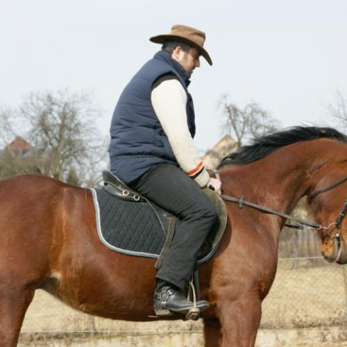 SAFE HORSEMANSHIP ze sedla, kobyla Šarule