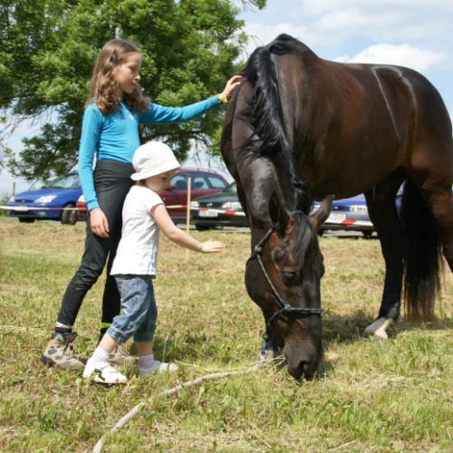 Ukázka práce s koňmi na dětském dnu v Zelčíně 29.5.2011